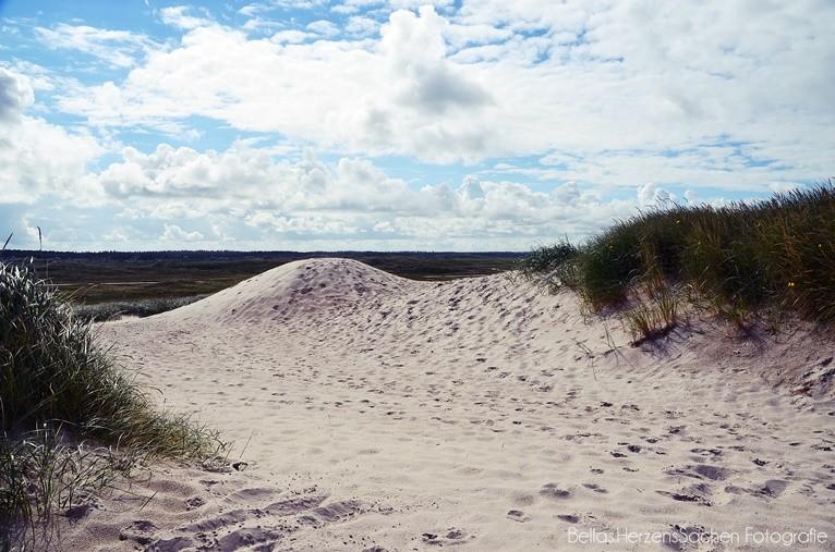 Dänemark Dünen Strand