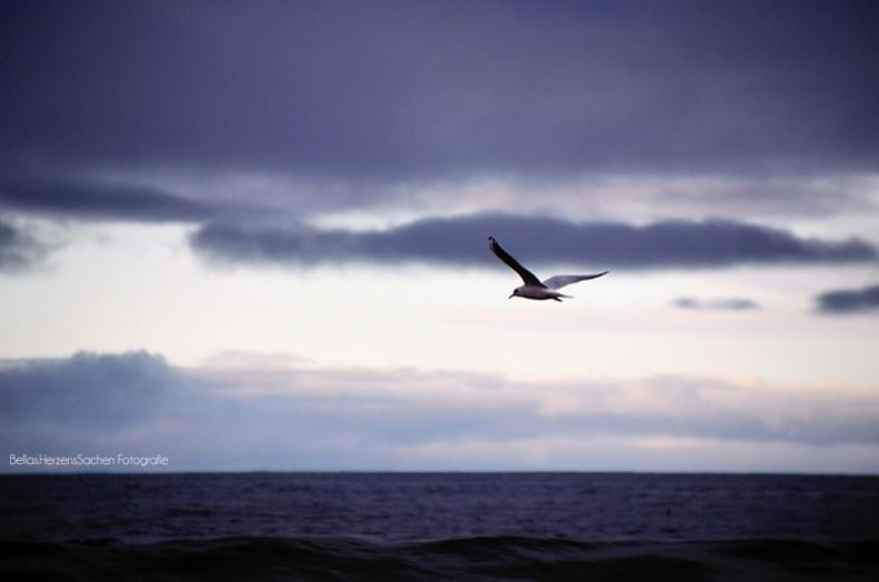 Vogel über Meer