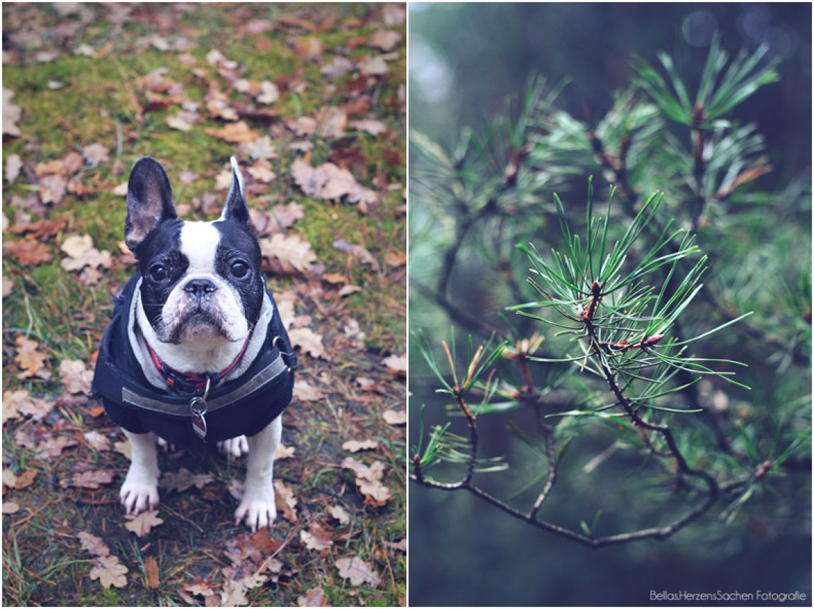 Paula im Wald