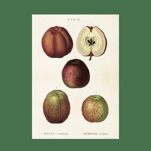 Vintage Poster Apfel Sköna Ting