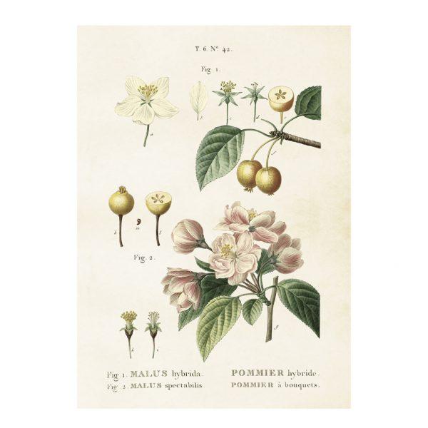 Sköna Ting Vintage Plakat Apfelbüte 50x70