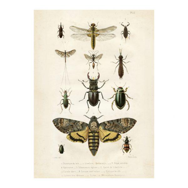 Vintage Poster Insekten Sköna Ting 50x70