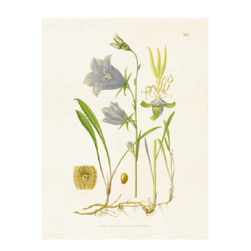 Vintage Poster Glockenblume Sköna Ting 18x24