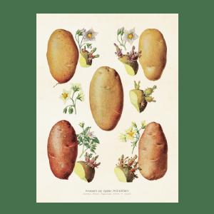 Vintage Plakat Sköna Ting Kartoffeln 18x24