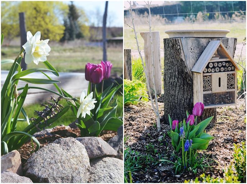 Bauerngarten Frühling