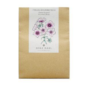 Phlox drummondii Cherry Caramel Sommer-Phlox von Jora Dahl