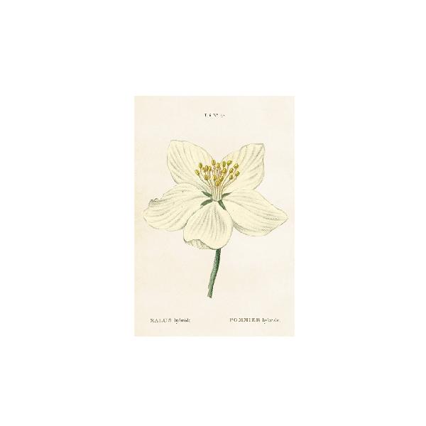 Vintage Postkarte Blüte von Sköna Ting