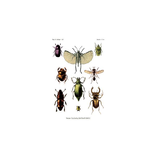 Postkarte Vintage Käfer