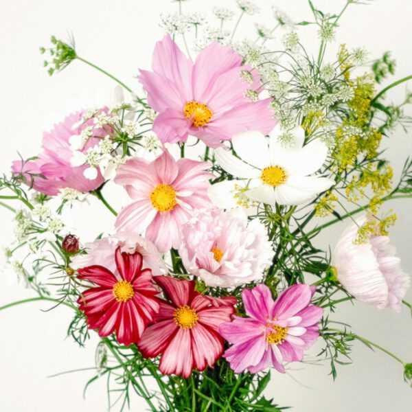 Wild Bouquets Cosmos Collection Jora Dahl